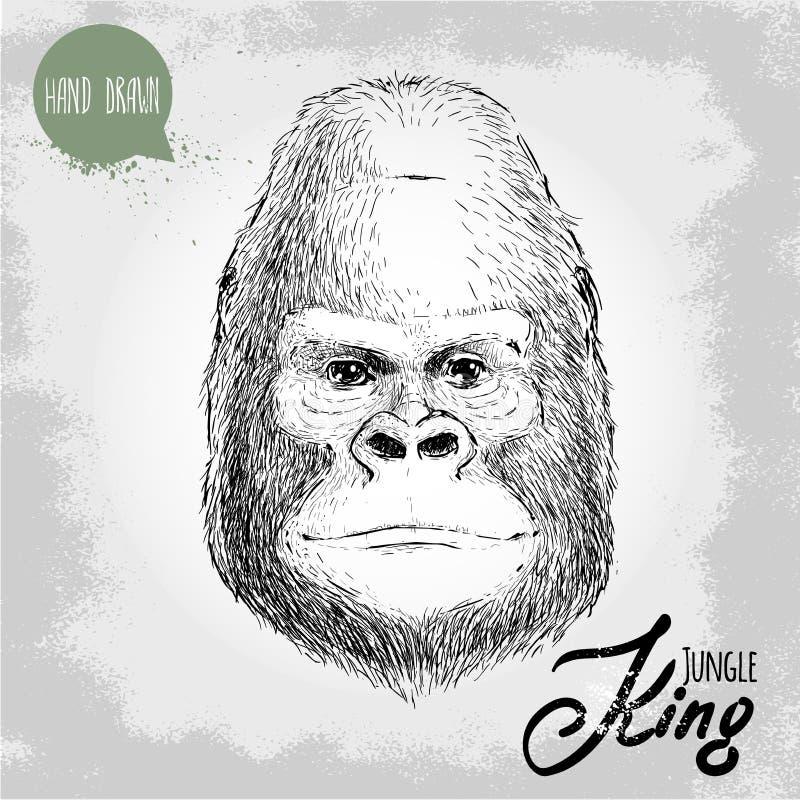 Dé el ejemplo exhausto del estilo del bosquejo de la cara masculina del mono del gorila ilustración del vector