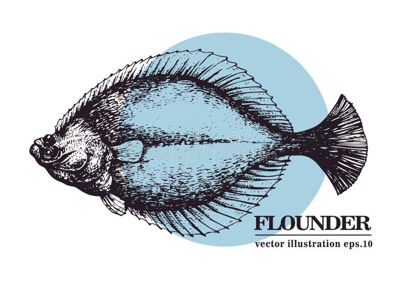 Dé el ejemplo exhausto del vintage del vector de los mariscos del bosquejo de los pescados de la platija Puede ser el uso para el ilustración del vector