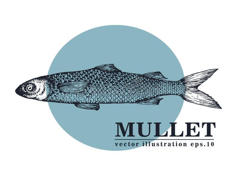 Dé el ejemplo exhausto del vintage del vector de los mariscos del bosquejo de los pescados del salmonete Puede ser el uso para el libre illustration