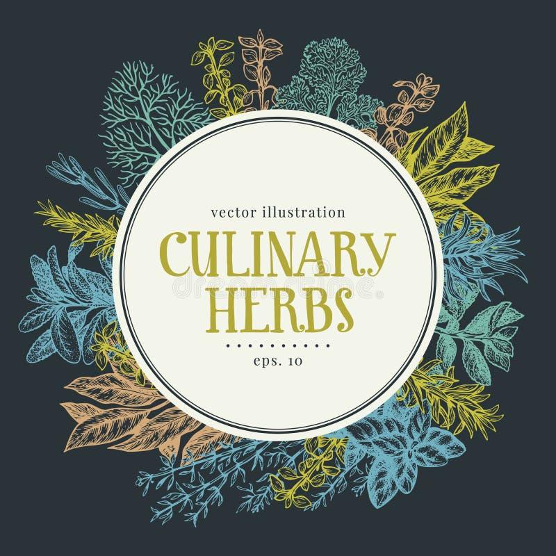 Dé el marco exhausto con las hierbas y las especias culinarias Vector el fondo para el menú del diseño, empaquetando, recetas, et stock de ilustración