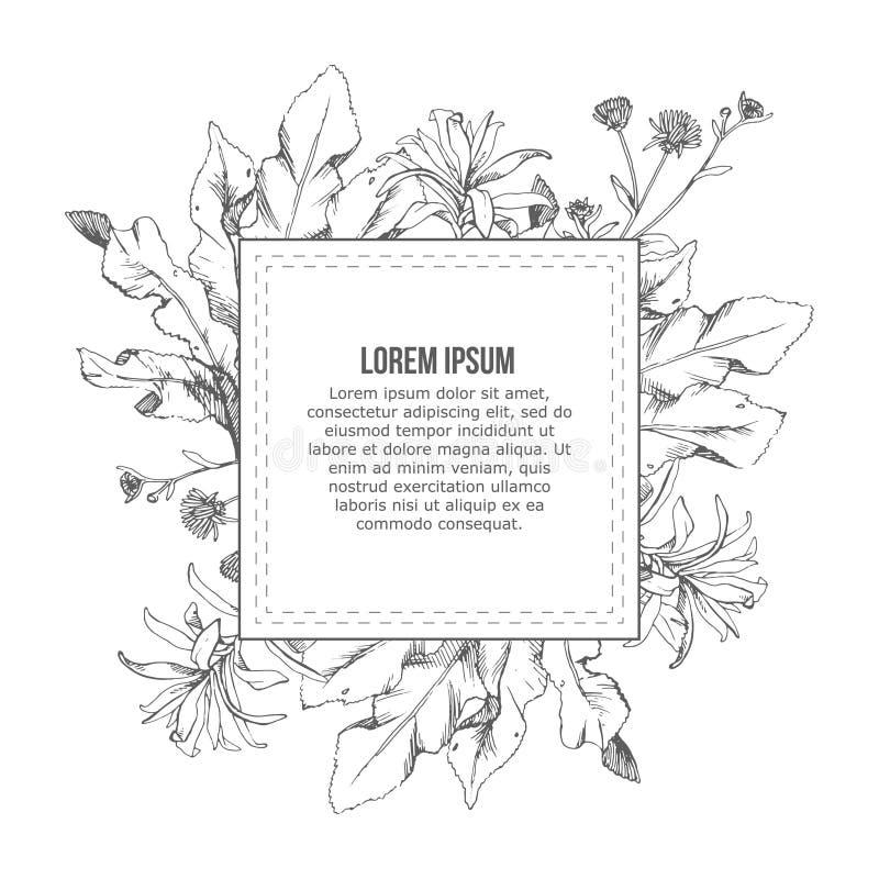 Dé el marco exhausto con los elementos florales del vintage de las flores y de las hierbas libre illustration