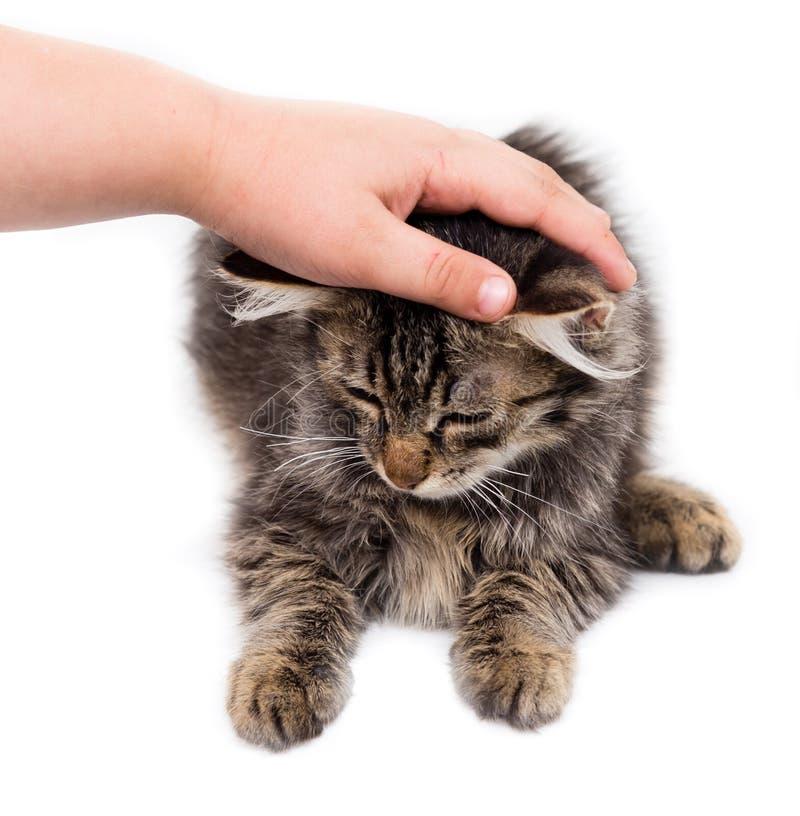 Dé la caricia de un gato en un fondo blanco foto de archivo libre de regalías