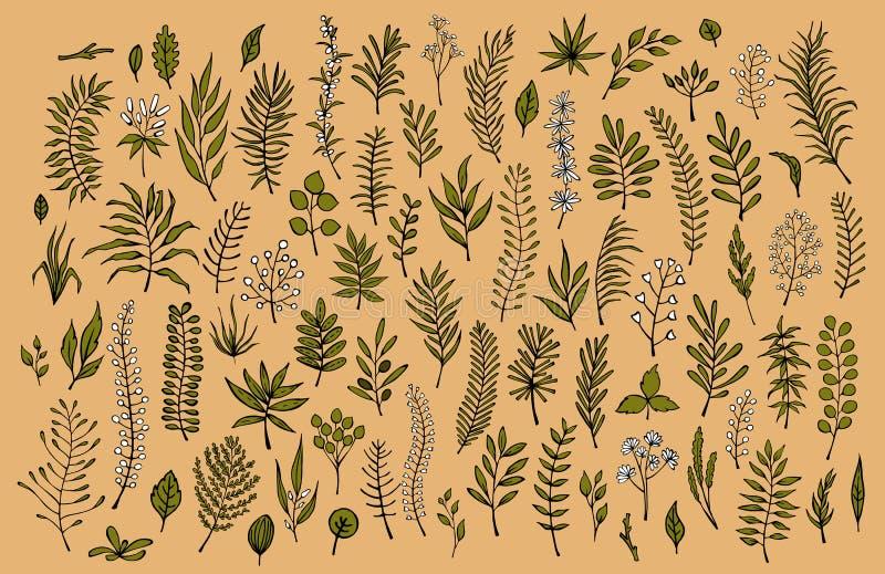 Dé la colección floral exhausta de las ramas y de las ramitas del verdor stock de ilustración