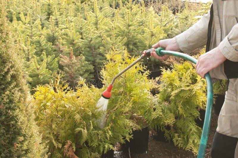 D la manguera de jard n con un rociador del agua regando for Manguera de jardin 1 2