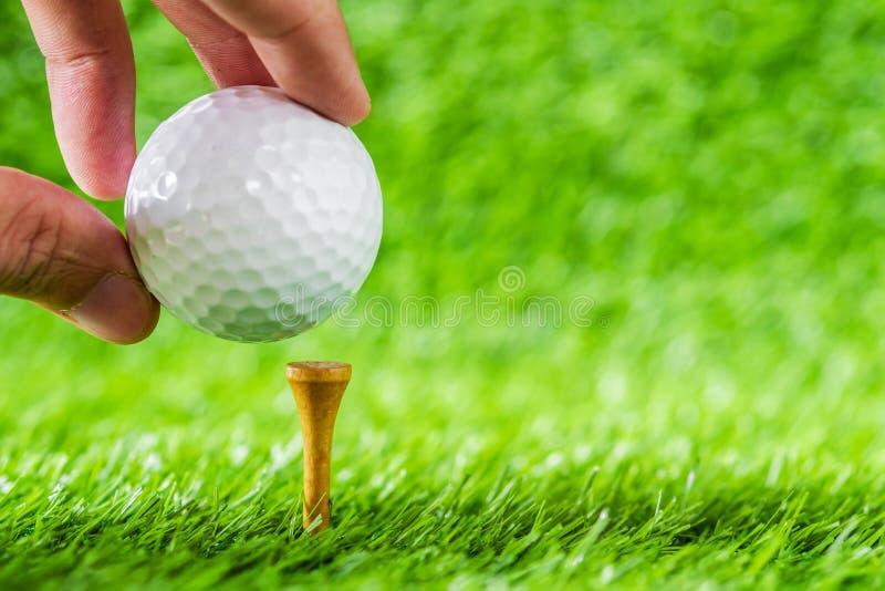 Dé la pelota de golf del control puesta en la madera del marrón de la camiseta con el backg de la hierba verde fotografía de archivo