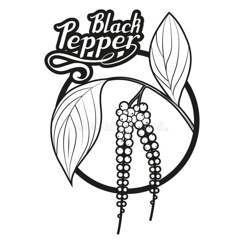 Dé la pimienta negra exhausta, ingrediente picante, logotipo de la pimienta negra, alimento biológico sano, condimente la pimient ilustración del vector
