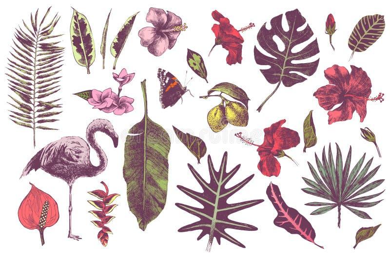 Dé las hojas, las flores y el flamenco tropicales exhaustos ilustración del vector