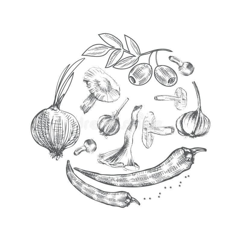 Dé las verduras exhaustas del bosquejo, setas del ejemplo del vector, aceituna, pimienta, cebolla aislada en el blanco, ideal par libre illustration