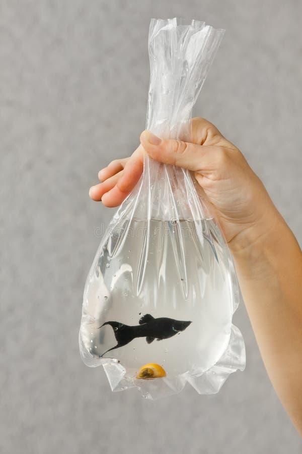 Dé llevar a cabo un paquete con un pescado comprado del acuario fotos de archivo