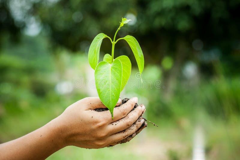 Dé sostener el árbol joven en el suelo para preparan la planta en la tierra imagen de archivo