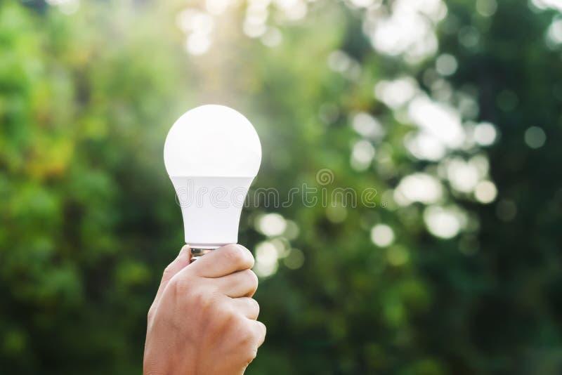 dé sostener el bulbo llevado en fondo y sol verdes de la naturaleza imagen de archivo