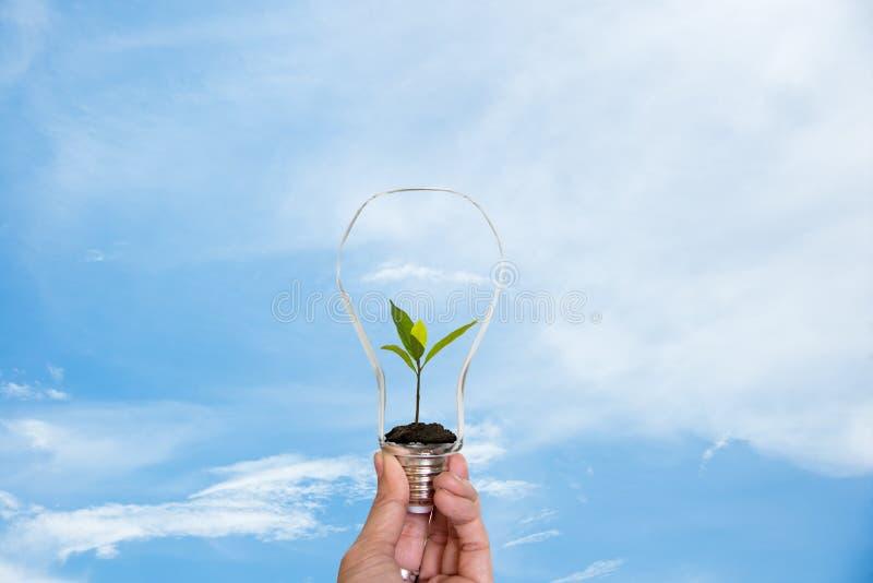 Dé sostener encendido la bombilla con la planta verde dentro para la tierra de ahorro, fondo del cielo azul de la naturaleza imagen de archivo