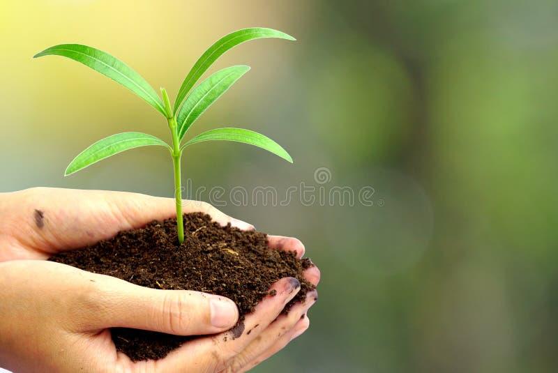 Dé sostener la planta verde en suelo sobre la naturaleza del extracto de la falta de definición, foto de archivo libre de regalías