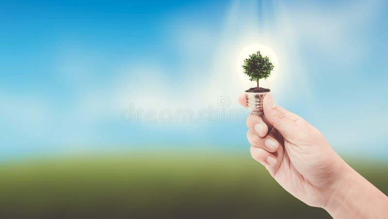 Dé sostener una bombilla con energía y el árbol verde fresco dentro en fondo de la naturaleza fotografía de archivo libre de regalías