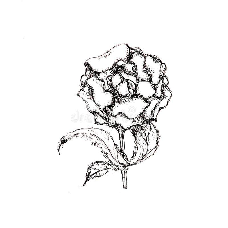 Dé a tinta exhausta de la pluma el bosquejo artístico floral aislado en blanco stock de ilustración