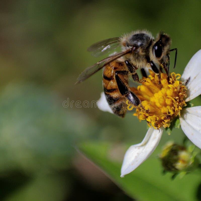 Débarquant sur la fleur image stock