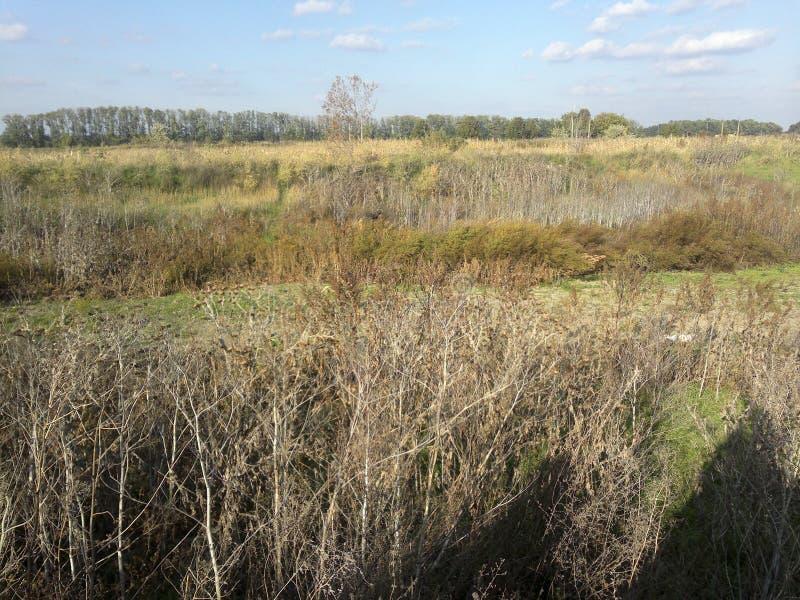 Débarquez le blé d'arbre d'herbe, culture, champ, usine de céréale, agriculture images libres de droits
