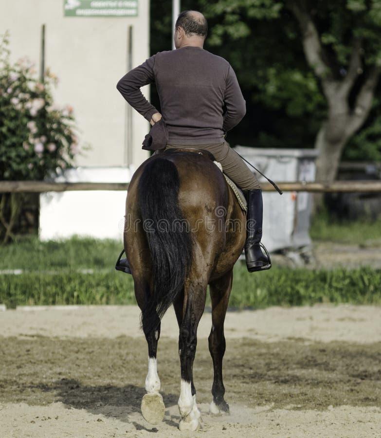 Débarras de cheval, comique image stock