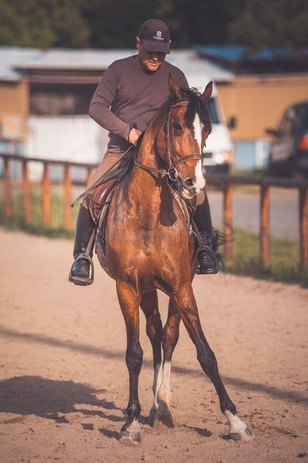 Débarras de cheval, comique photo libre de droits