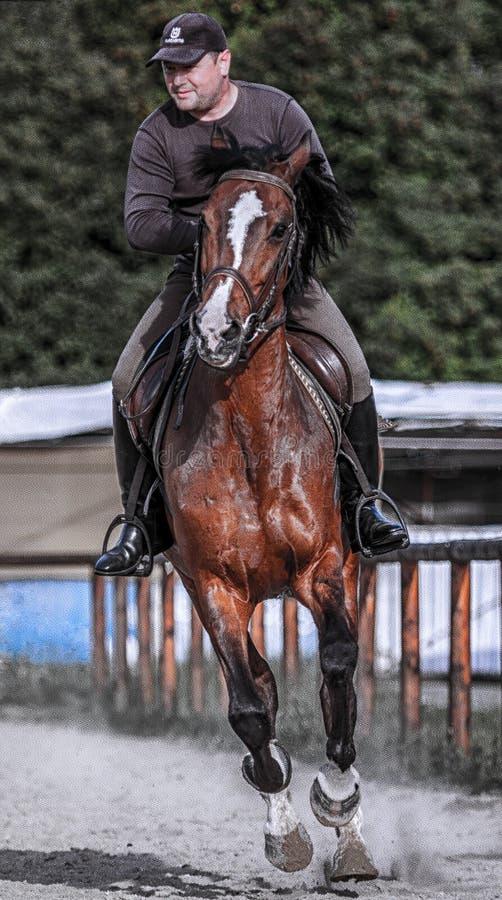 Débarras de cheval, comique images libres de droits