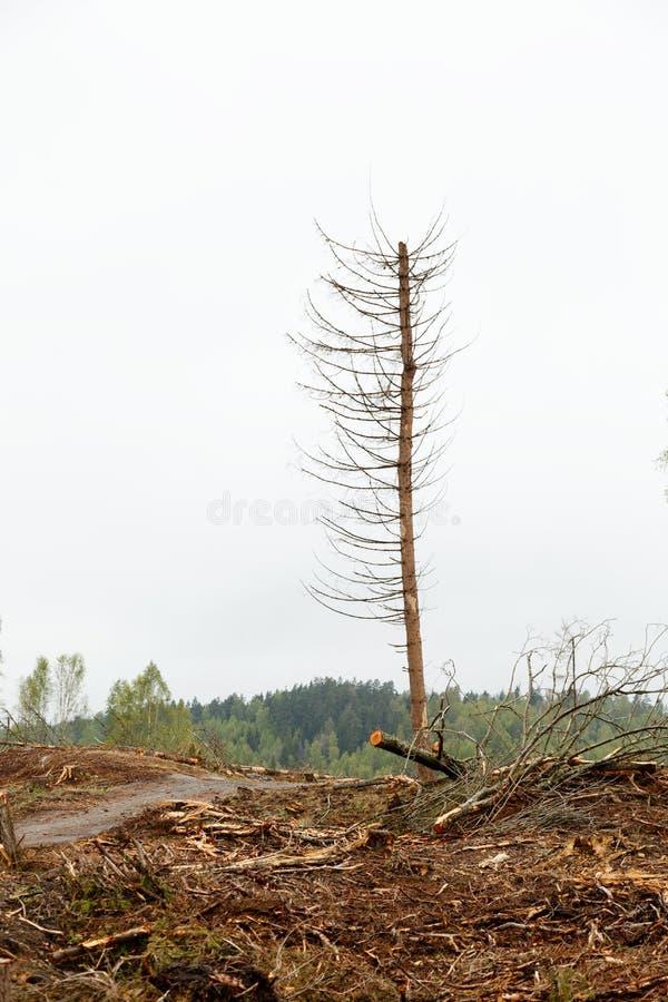 Déboisement ambiant, un arbre, arbre isolé image libre de droits