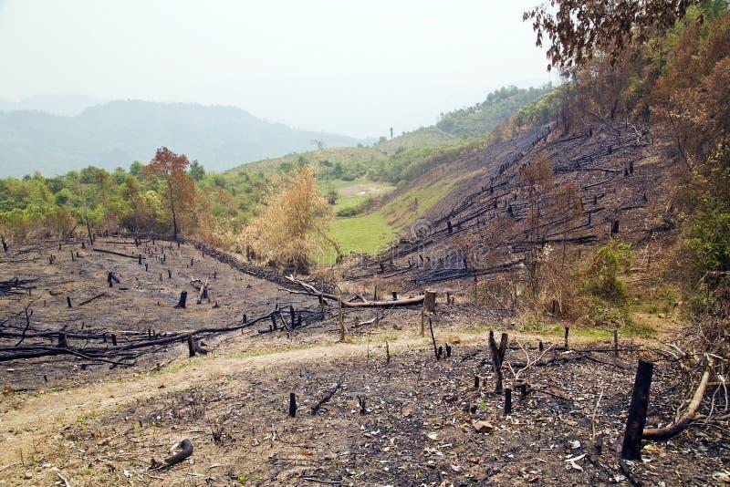 Déboisement, après incendie de forêt, catastrophe naturelle, Laos images stock