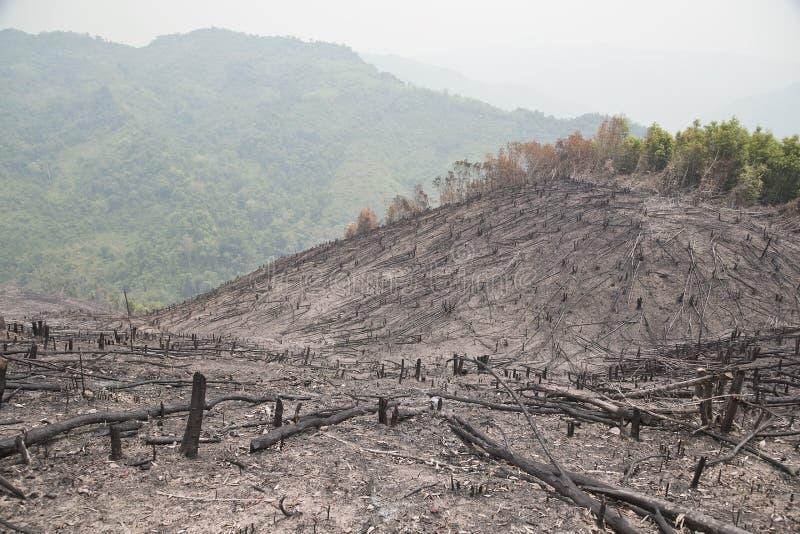 Déboisement, après incendie de forêt, catastrophe naturelle, Laos photo libre de droits