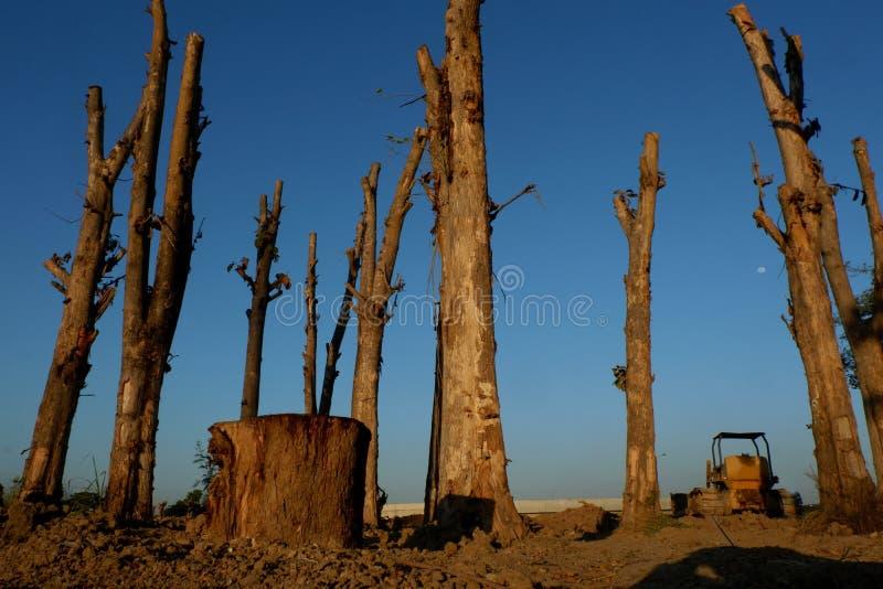 Déboisement, arbres de Cutted de la forêt en Asie du Sud-Est photographie stock libre de droits