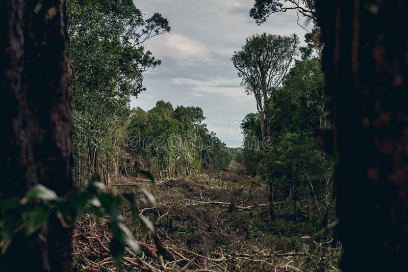 Déboisement d'une forêt tropicale tropicale images stock