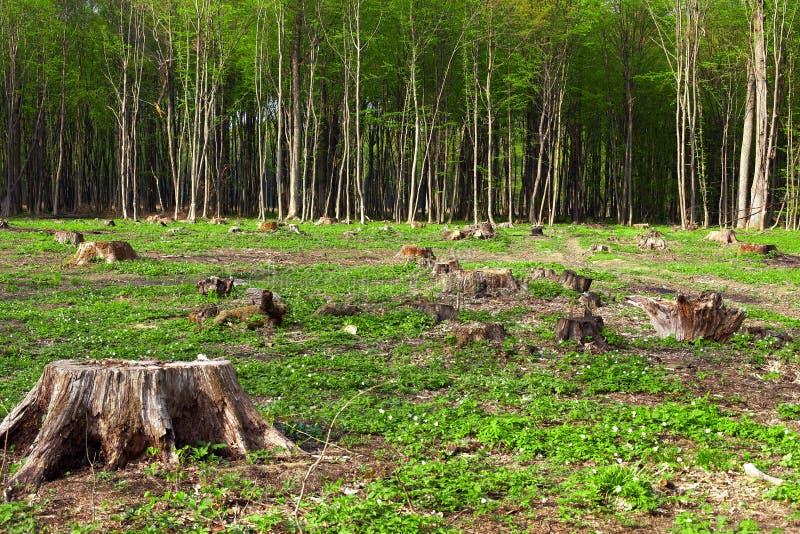 Déboisement de belles zones d'origine de forêt image stock
