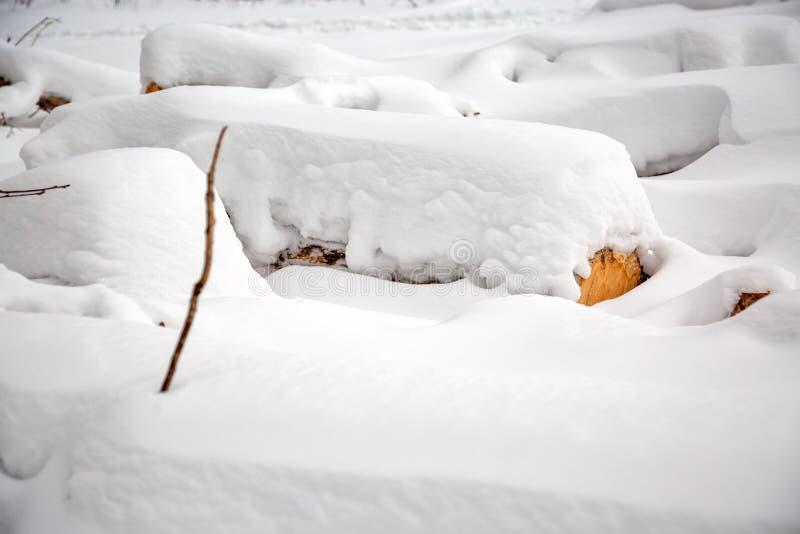 déboisement Moisson de bois de charpente Logs sous la neige Actions de bois en congères d'hiver de forêt images libres de droits