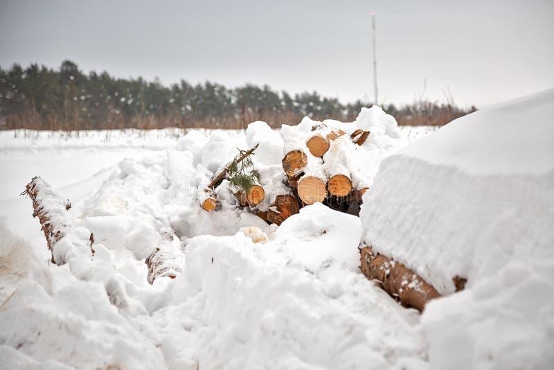 déboisement Moisson de bois de charpente Logs sous la neige Actions de bois en congères d'hiver de forêt photos stock