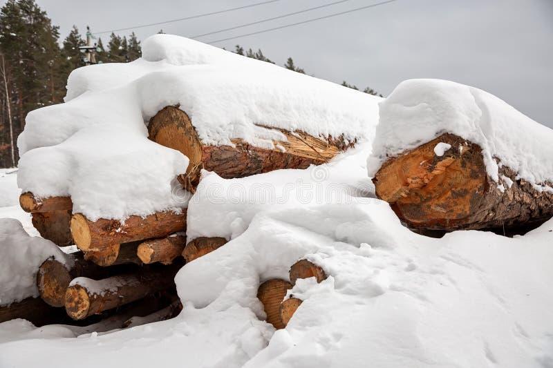 déboisement Moisson de bois de charpente Logs sous la neige Actions de bois en congères d'hiver de forêt photos libres de droits