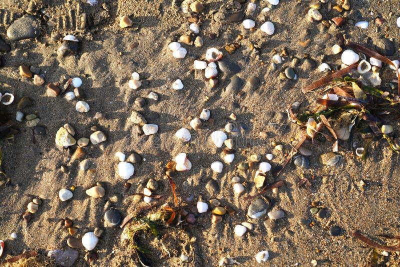 Débris d'océan des roches et des coquilles douces en bois de dérive sur le sable images stock