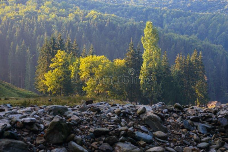 Début d'automne en montagnes carpathiennes photos libres de droits