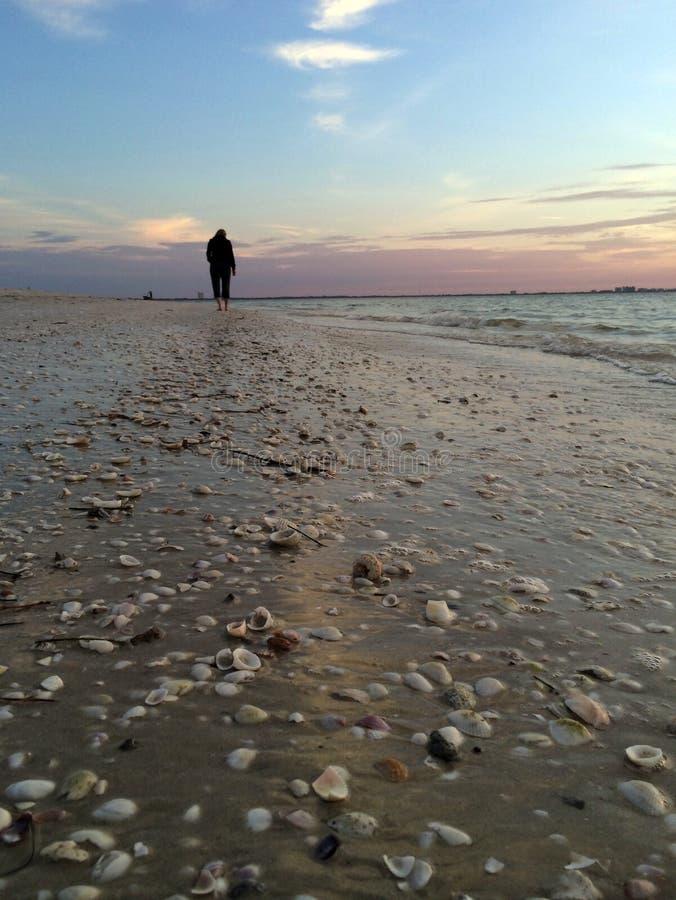 Début de la matinée beachcombing à l'île de Sanibel, la Floride images libres de droits