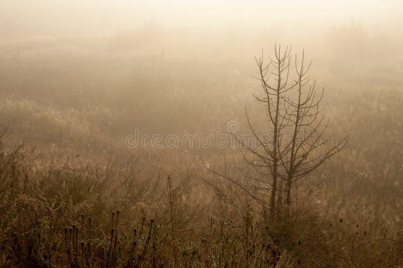 Début de la matinée dans le domaine avec le brouillard d'automne et les gouttes de l'eau dans le ciel Teintes de brun Rien n'a pu images stock
