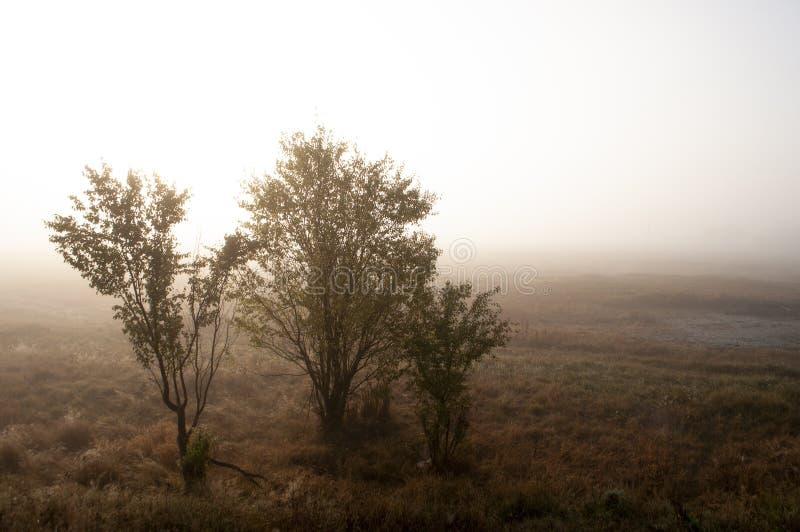 Début de la matinée dans le domaine avec le brouillard d'automne et les gouttes de l'eau dans le ciel Teintes de brun Rien n'a pu photographie stock libre de droits