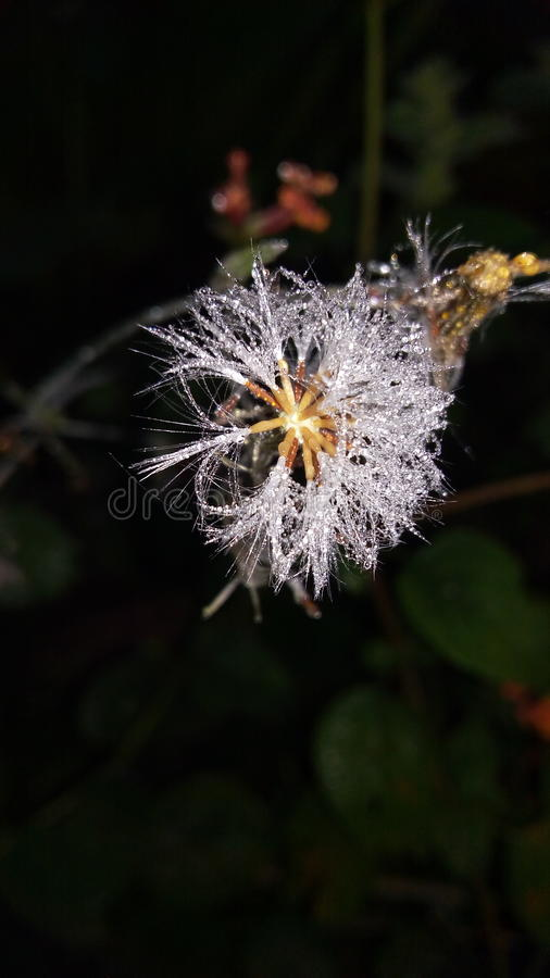 Début de la matinée de fleur de neige d'hiver image stock