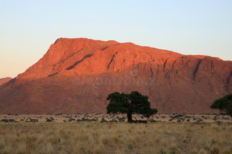 Download Début De La Matinée En Namibie Image stock - Image du campagne, heat: 2146757