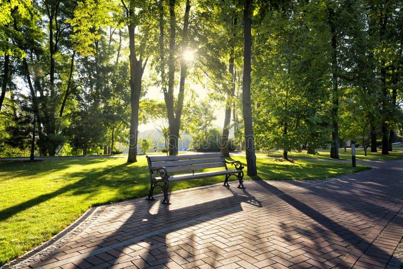 Début de la matinée en parc photos stock