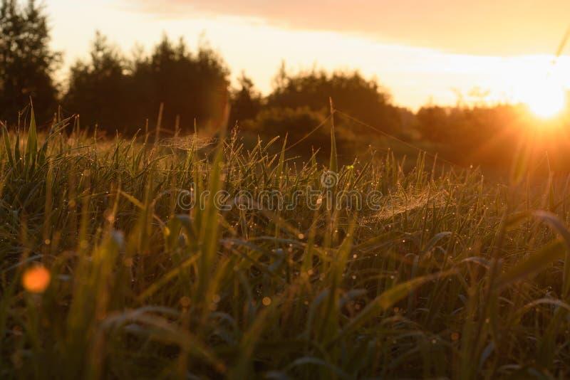 Début de la matinée sur les astuces de l'herbe image stock