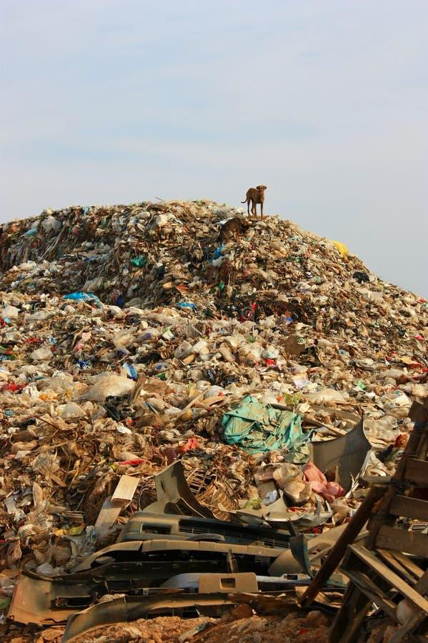 Décharge de déchets municipale et le chien mince en décharge environnement images libres de droits