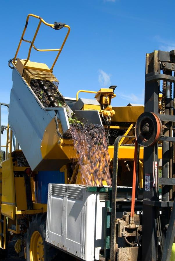 déchargement de raisins photo stock