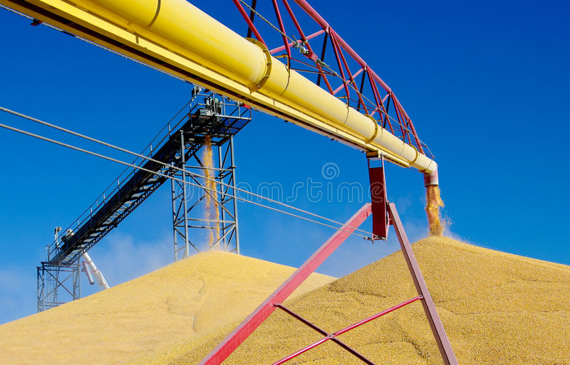 Déchargement du maïs photo stock