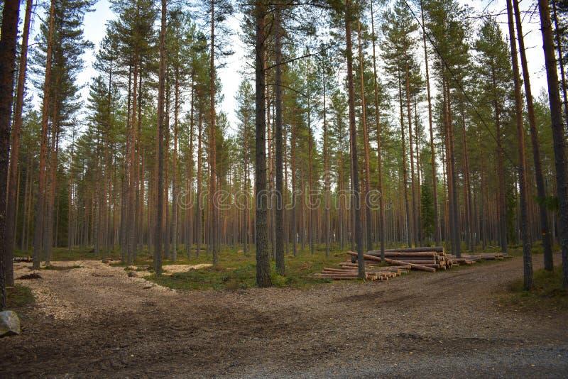 Déchets, rondins et forêt de bois photos stock