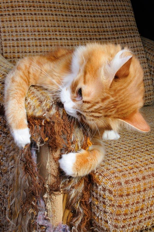 Déchirure de chat la tapisserie d'ameublement sur le fauteuil image stock