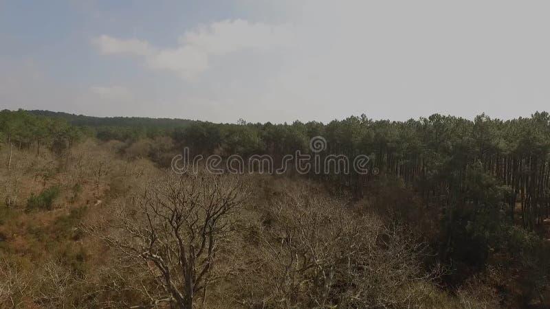Décollage devant les arbres morts banque de vidéos