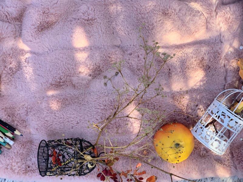 Décor d'automne encore vivant sur fond rose images stock
