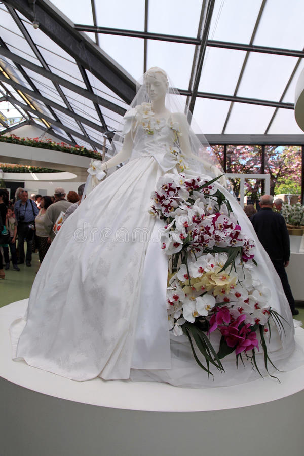 orchidee nuptiale